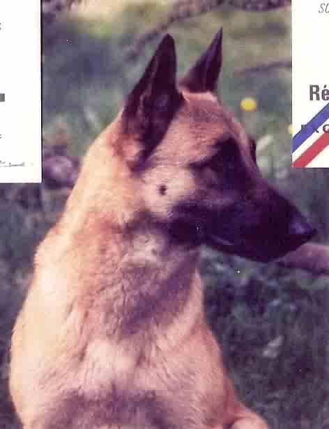 CAC - RCAC Cathy des Loups Mutins