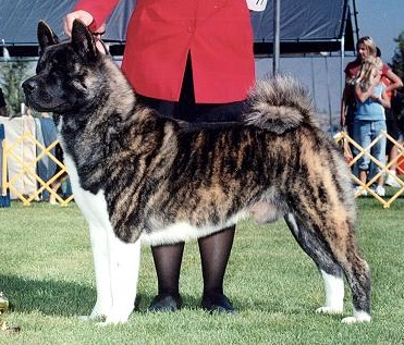 AKC CH MaJer's Get Your Own Rigg